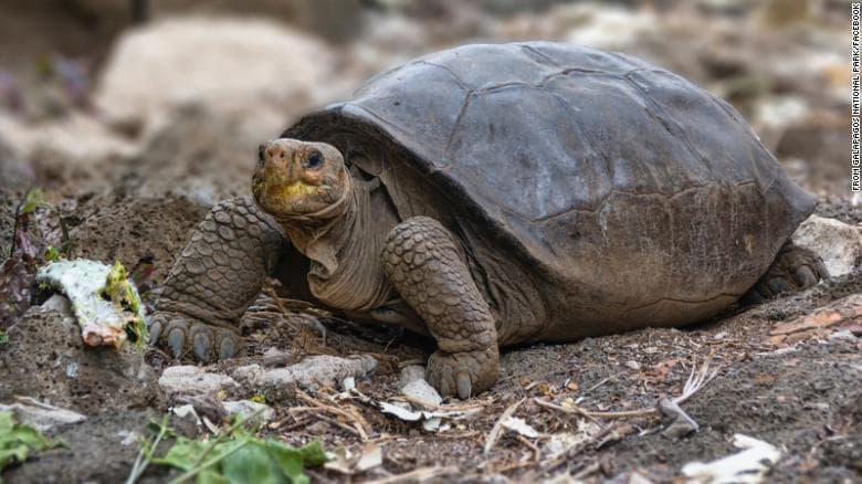 открита изчезнала гигантска костенурка